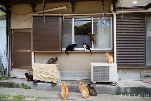 Милые и забавные животные, часть 97 (36 фото)