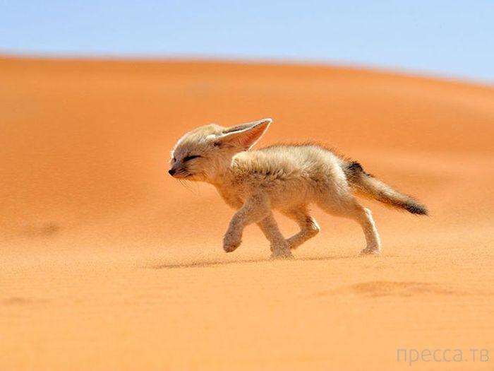 Богатый животный мир Земли (39 фото)
