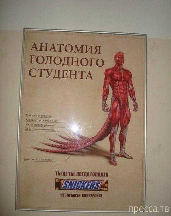 Народные маразмы - реклама и объявления, часть 145 (39 фото)