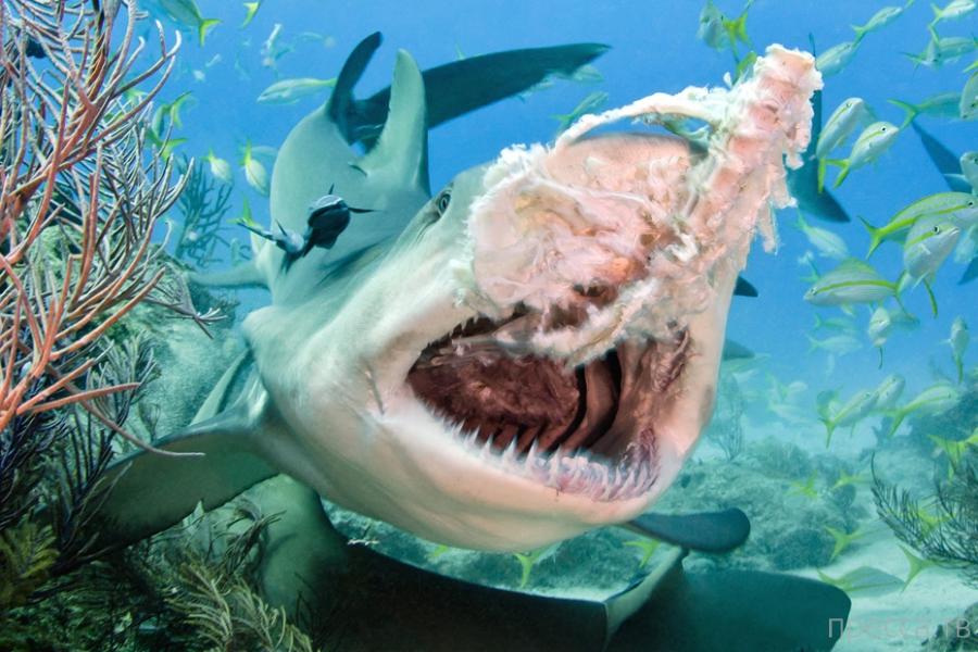 Шикарные фотографии таинственных обитателей морских глубин от Тодда Бретла (29 фото)