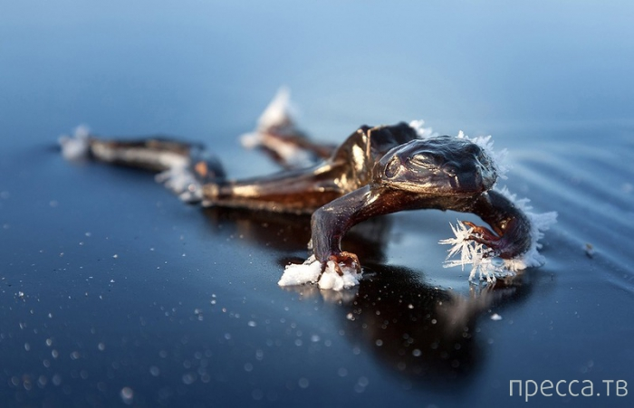 Фотоконкурс «National Geographic Photography Contest 2013» (36 фото)