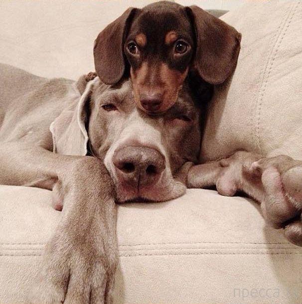Неразлучные друзья (12 фото)