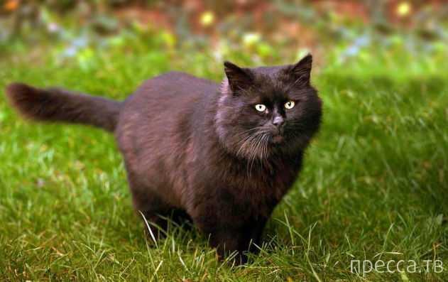 Кот держит в страхе жителей деревни (7 фото)