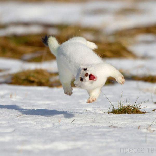 Милые и забавные животные, часть 101 (41 фото)