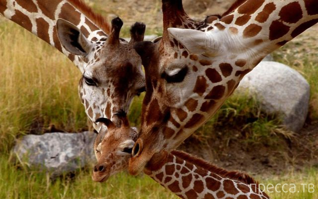Милые и забавные животные, часть 102 (33 фото)