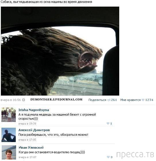 Прикольные комментарии из социальных сетей, часть 38 (51 фото)