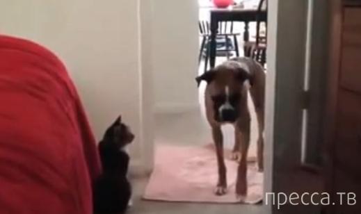 Ты не пройдешь, собака!