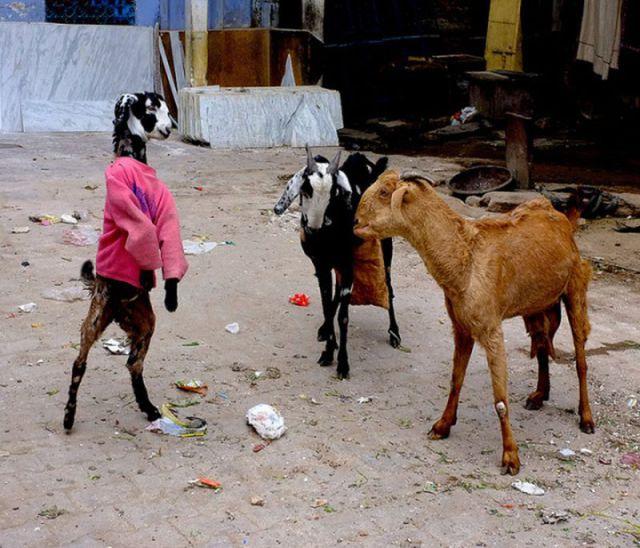 Милые и забавные животные, часть 104 (48 фото)