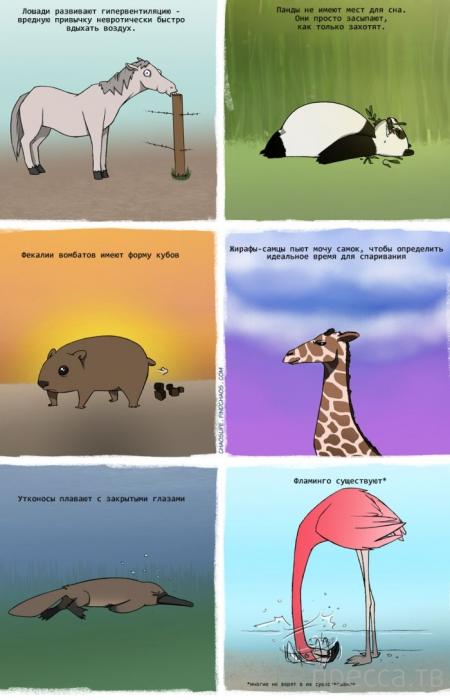 Веселые комиксы и карикатуры, часть 40 (27 фото)