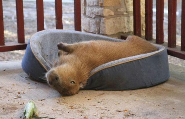 Милые и забавные животные, часть 106 (40 фото)