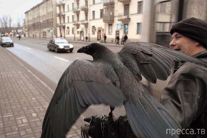 Петербургский ворон Жора (5 фото)
