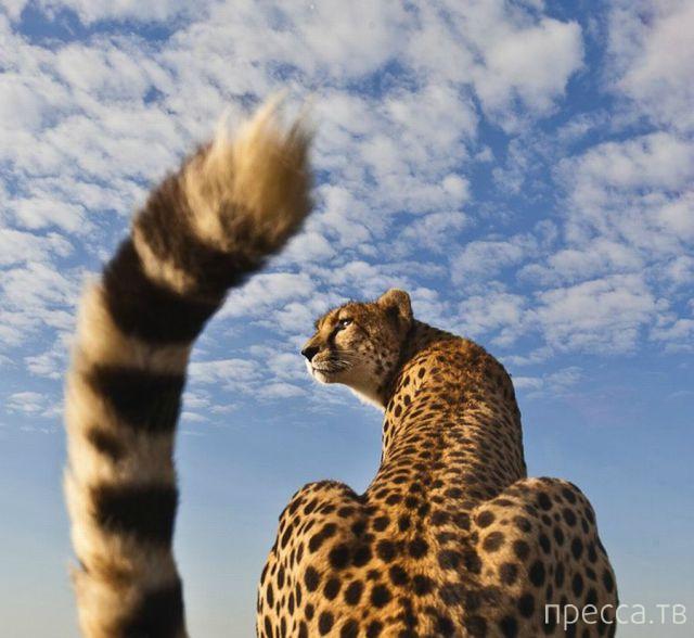 Милые и забавные животные, часть 108 (43 фото)