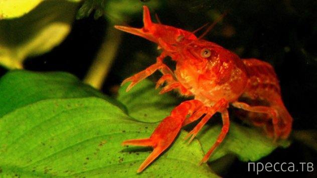 Топ 10: Самые маленькие животные на планете (7 фото + 4 видео)