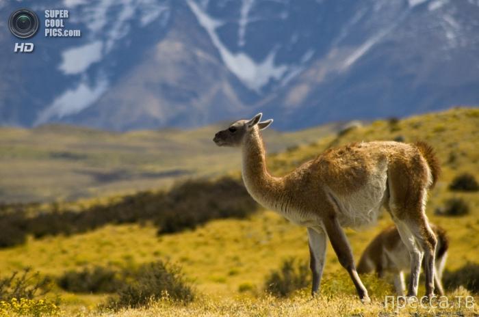 Национальный парк Торрес-Дель-Пайне в Чили (19 фото)