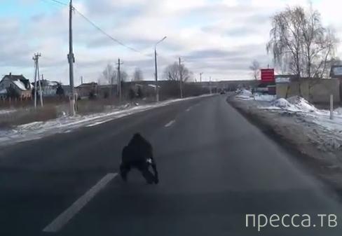 Собака выбежала под колеса...