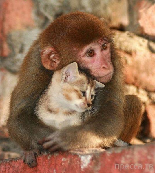 Милые и забавные животные, часть 110 (46 фото)
