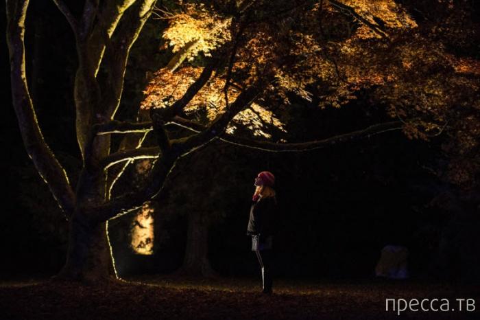 Праздничные огни мира (19 фото)