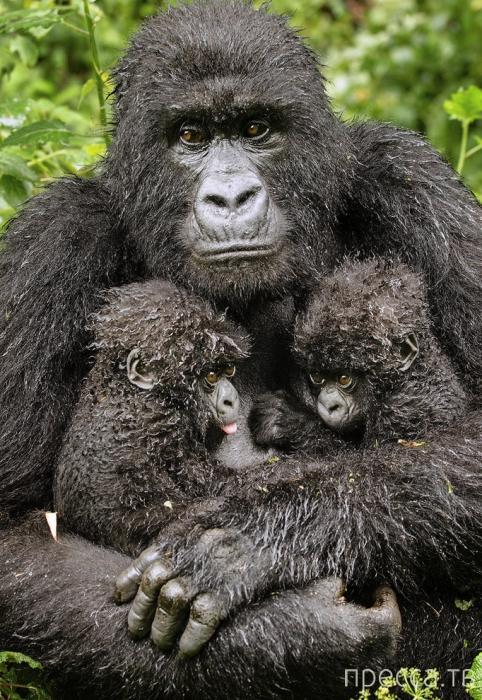 Лучшие фотографии диких животных (20 фото)