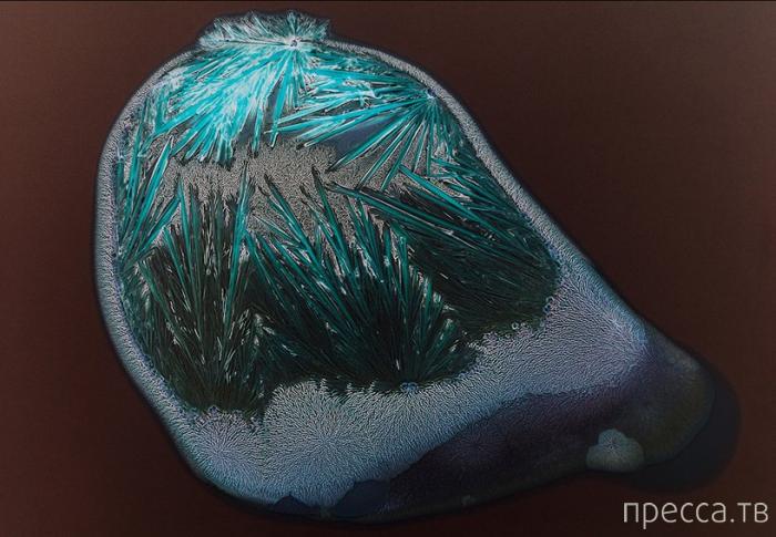 Наркотические вещества под микроскопом (12 фото)