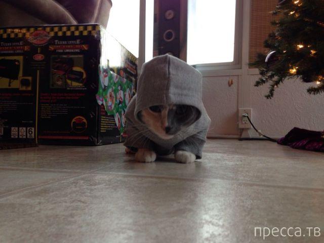 Милые и забавные животные, часть 116 (48 фото)