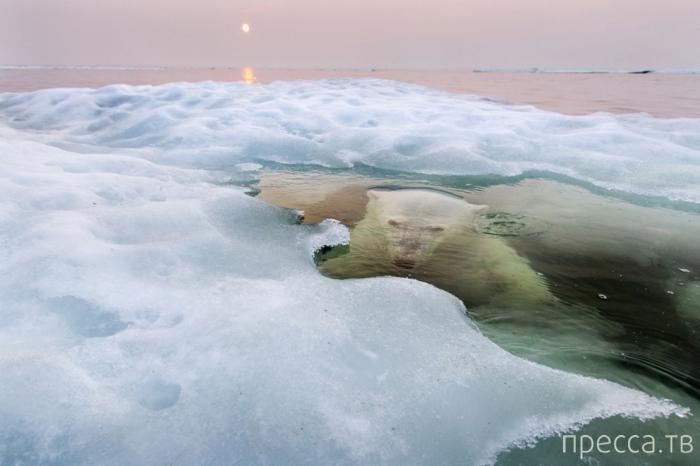 Победители фотоконкурса National Geographic Photography Сontest 2013 (12 фото)