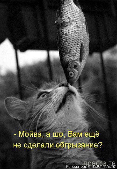 Прикольные котоматрицы, часть 7 (47 фото)