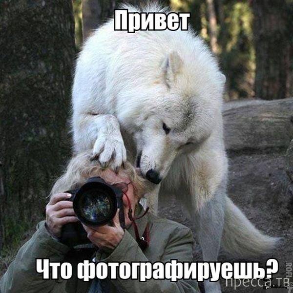 Подборка прикольных фотографий, часть 117 (72 фото)