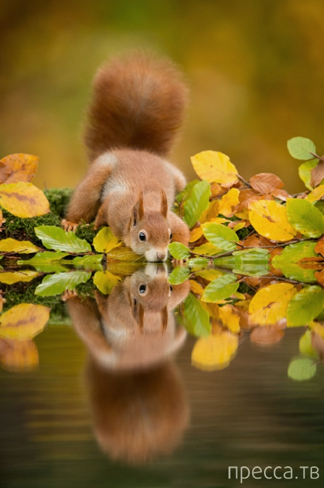 Забавные зверюшки от голландского фотографа Edwin Kats (11 фото)