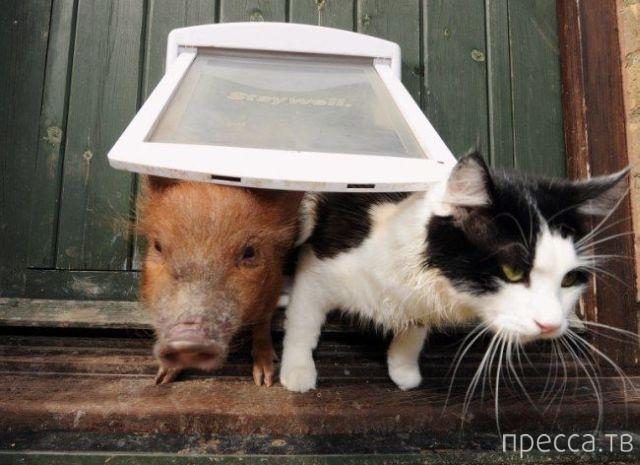 Милые и забавные животные. часть 119 (39 фото)