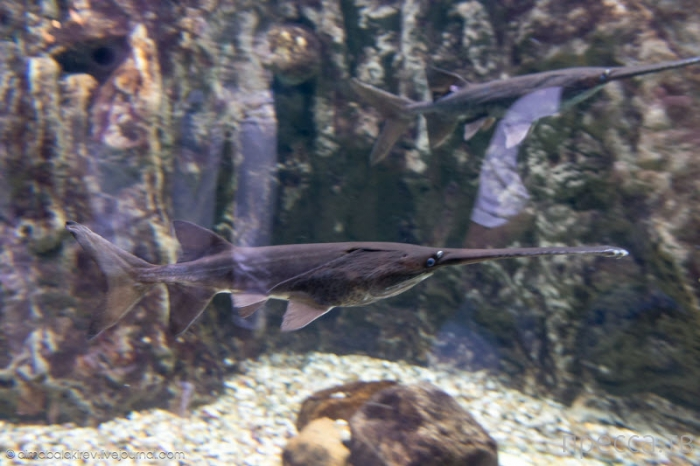 Дубайский аквариум (20 фото)