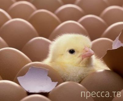 Мичманские яйца...