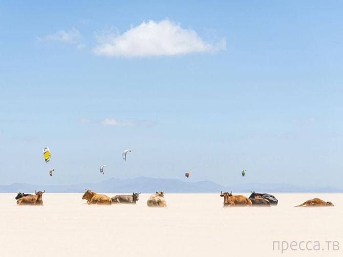Лучшие фотографии National Geographic декабря 2013 года (32 фото)