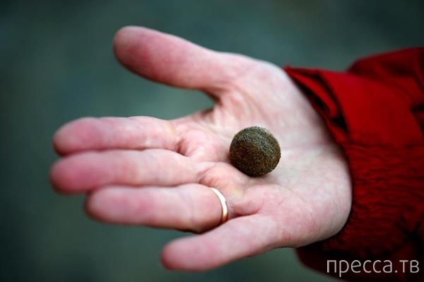 Загадочные сферолиты острова Чампа (21 фото)