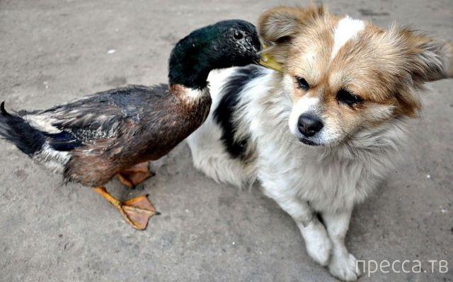 Милые и забавные животные, часть 120 (42 фото)