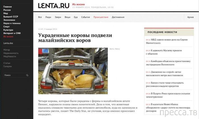 Забавные и смешные заголовки газет (33 фото)