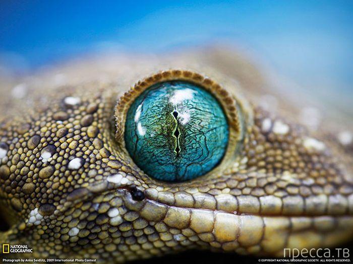Подборка красивых фотографий животного мира (30 фото)