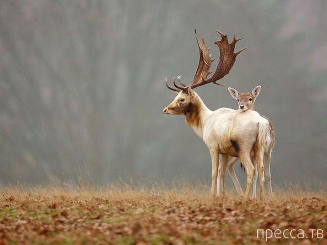 Милые и забавные животные, часть 123 (40 фото)