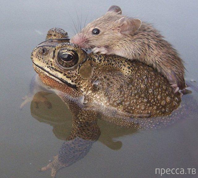 Милые и забавные животные, часть 124 (39 фото)