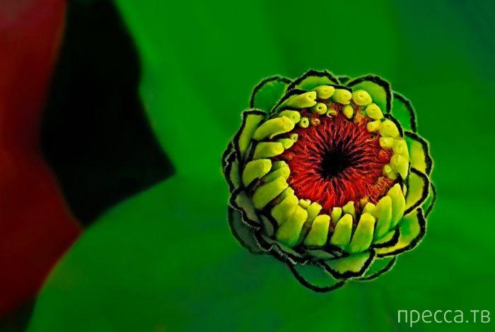 Красивые и яркие макроснимки (26 фото)