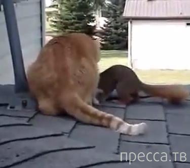 Белка играет с домашним котом