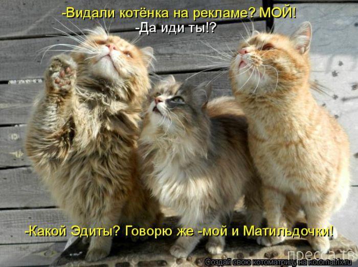 Самые смешные котоматрицы, часть 2 (41 фото)
