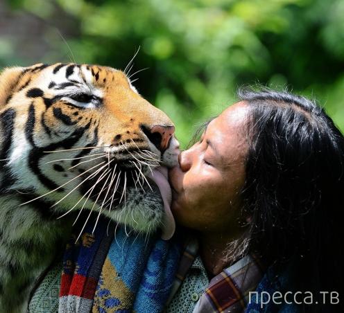 Индонезиец Абдулла Солех дружит с бенгальской тигрицей (6 фото)