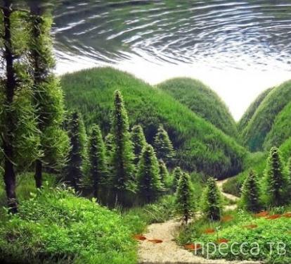 Лучшие фотографии с международного конкурса по оформлению аквариумов (19 фото)