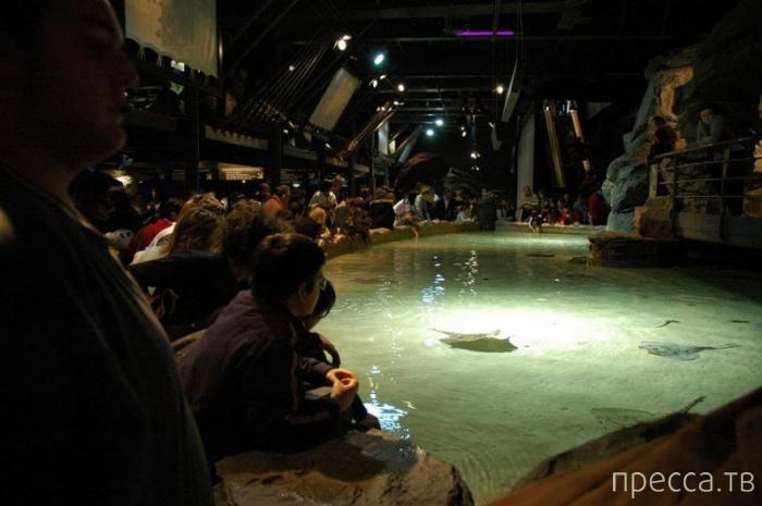 Аквариум Генуи - второй по величине в Европе (9 фото)