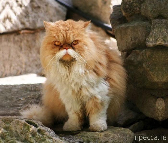 Прикольные усатые животные (13 фото)
