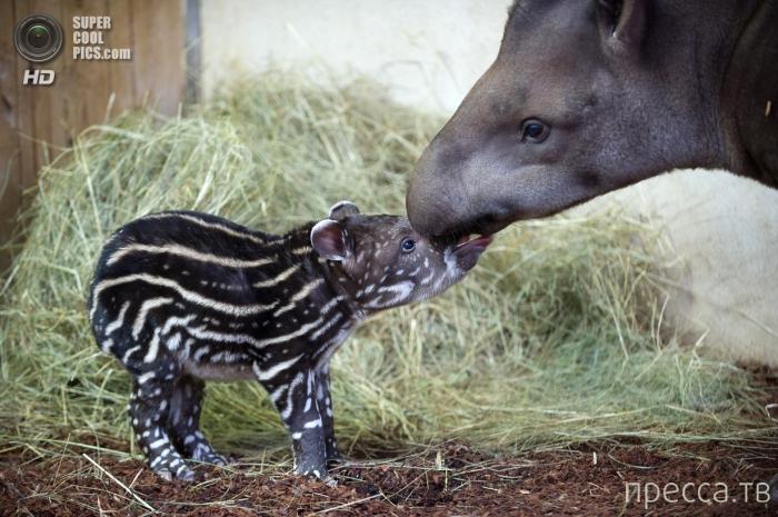 Милые детеныши-звереныши (20 фото)