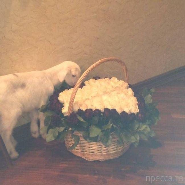 Необычный подарок на день рождения для Анастасии Волочковой (5 фото)