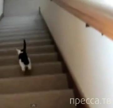 Лучшие приколы с котами