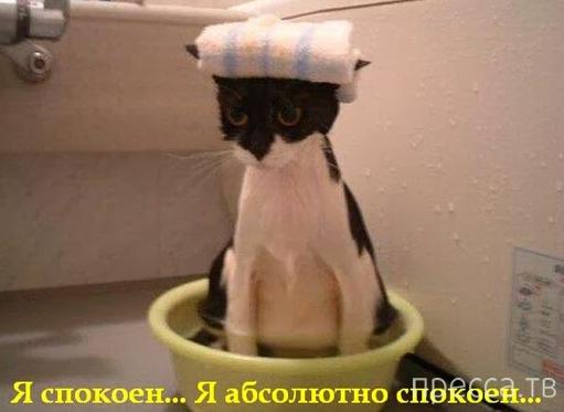 Купание кота, как вид боевого искусства (14 фото)