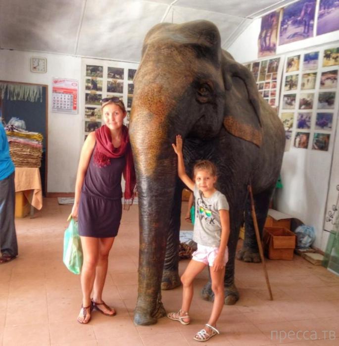 Бизнес на слоновьем навозе (12 фото)
